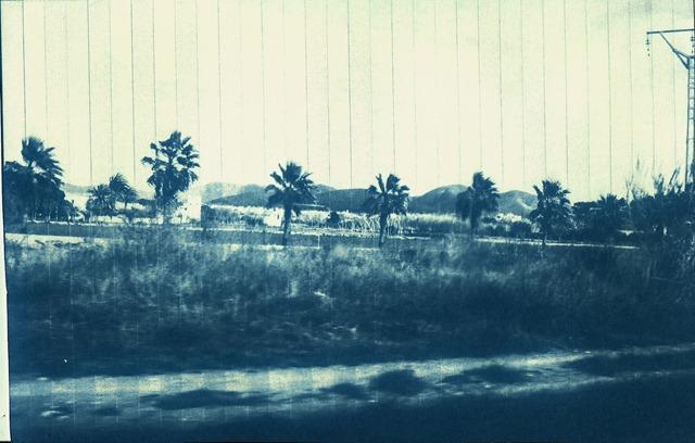 escanear0005 (2)palmeras