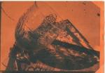 mai2013  sur cartoline orange
