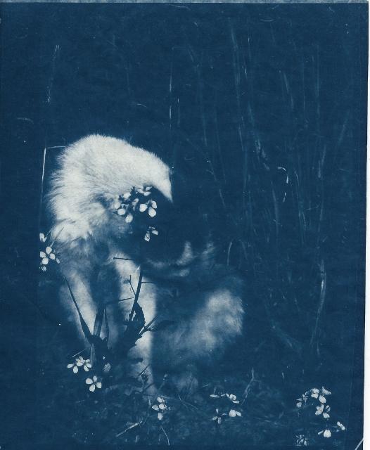 La chatte voisine Shakira14 avril 15