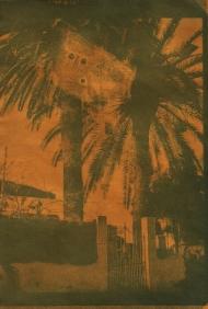 2013- Las palmeras que ya no estan