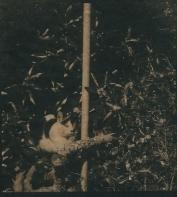 tirage cyanotype sur papier japonais 30g 13 avr.15